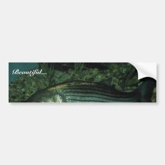 Lubina rayada pegatina de parachoque