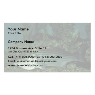 Lubina rayada plantilla de tarjeta de negocio