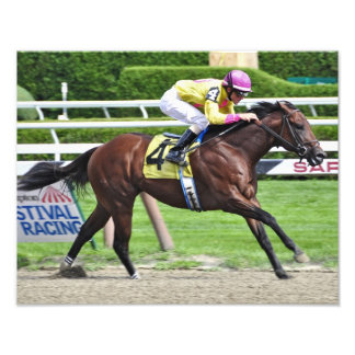 Lucci the Lion -2 year old Colt Photo Print