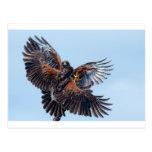 Lucha de los halcones para el control del cielo postal
