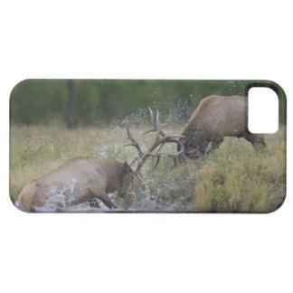 Lucha de toros de los alces, Yellowstone NP, Wyomi iPhone 5 Case-Mate Carcasas