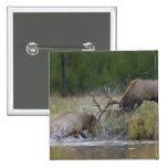 Lucha de toros de los alces, Yellowstone NP, Wyomi Pins