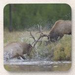 Lucha de toros de los alces, Yellowstone NP, Wyomi Posavasos De Bebidas