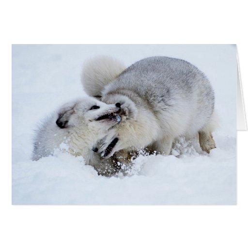 Lucha del Fox ártico Tarjeta De Felicitación