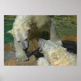 Lucha del juego de los osos polares póster