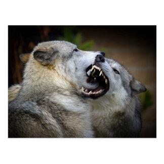 Lucha del lobo tarjetas postales