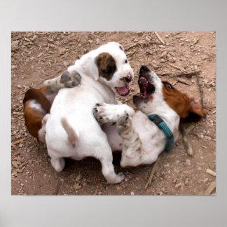Lucha que juega el pitbull americano y Basset Houn Poster