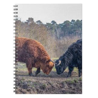 Luchar el toro negro y marrón del montañés del libro de apuntes