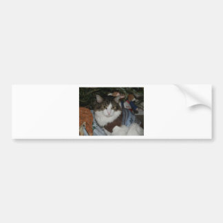Lucho-Noel-Raindeer.jpg Bumper Sticker