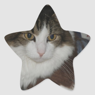 Lucho-Noel-Raindeer.jpg Star Sticker