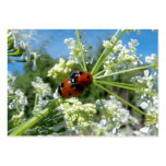 luck beetle large business cards (Pack of 100)