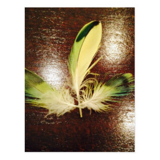 Luck feathers… on wood postcard