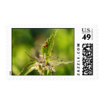 luck on nettle stamp