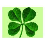 Lucky 4 Leaf Clover Post Cards