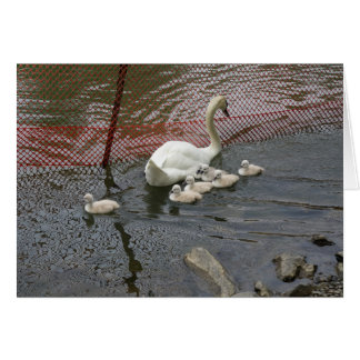 Lucky 7 Swan Family Greeting Card