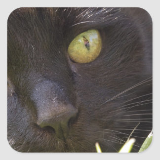 Lucky black cat square sticker