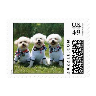 Lucky, Charlie + Sissy Jane Postage Stamp