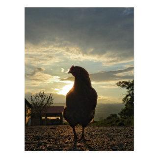 Lucky chicken postcard