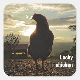 Lucky chicken square sticker