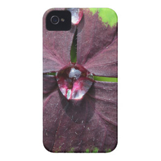 Lucky clover with a water drop iPhone 4 Case-Mate case