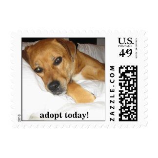 Lucky dog -  Adopt a dog today stamp - mutt