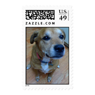 Lucky dog on a stamp