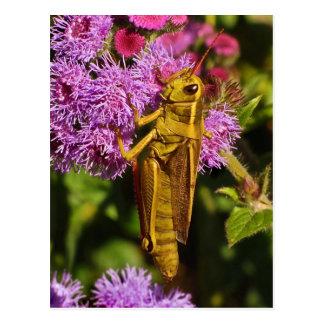 Lucky Grasshopper on Ageratum Postcard