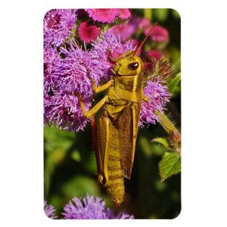 Lucky Grasshopper on Ageratum Rectangular Photo Magnet