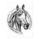 Lucky Horse Postcard
