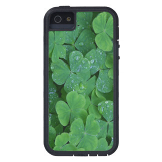 Lucky Irish Shamrocks iPhone SE/5/5s Case