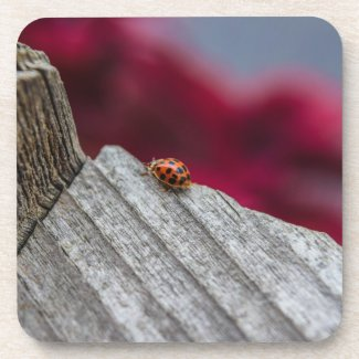Lucky Lady Bug Photography Coasters