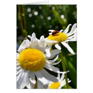 Lucky Ladybug Card