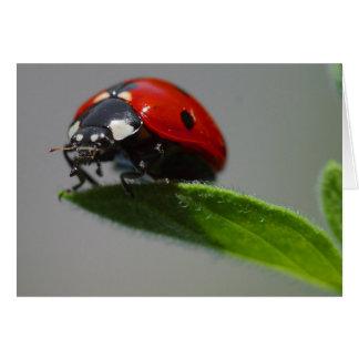 Lucky Ladybug Cards