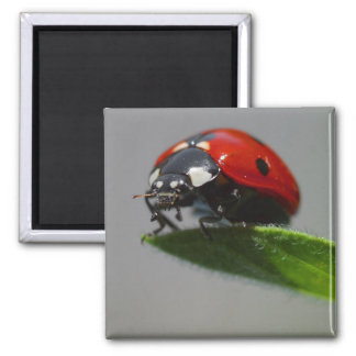 Lucky Ladybug Gift Ideas 2 Inch Square Magnet
