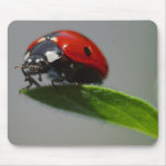 Lucky Ladybug Lovers gifts Mouse Mats