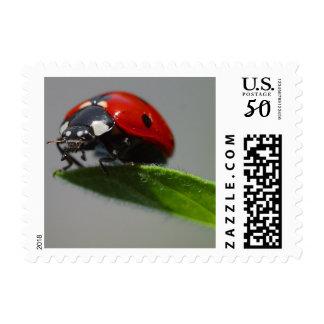 Lucky Ladybug Postage