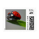 Lucky Ladybug Stamp