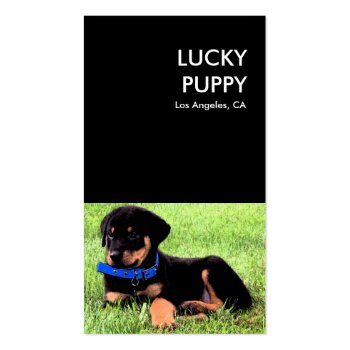 lucky puppy dog company business card template