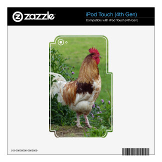 Lucky rooster skins for iPod touch 4G