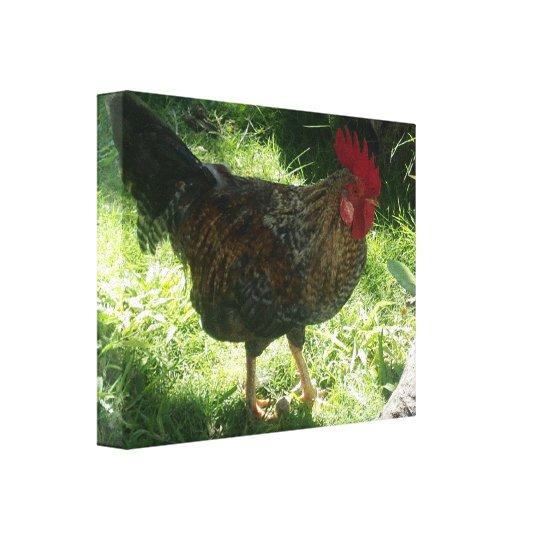 Lucky Rooster Wrapped Canvas