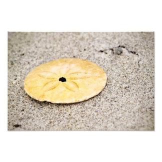 Lucky Sand Dollar Photograph