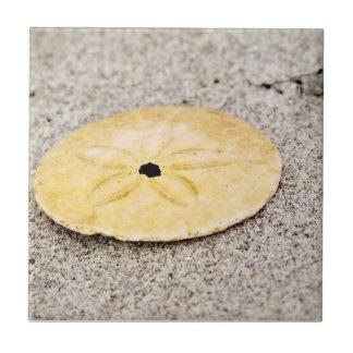 Lucky Sand Dollar Tile