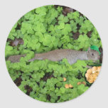 Lucky Squirrel in Clovers Classic Round Sticker