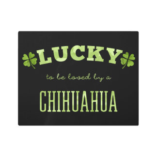 Lucky to be loved by a Chihuahua Metal Photo Print