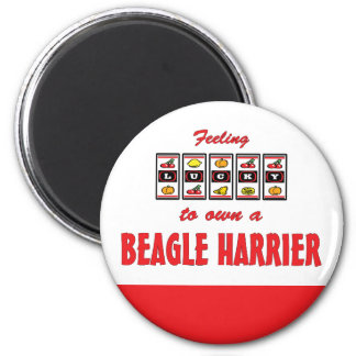 Lucky to Own a Beagle Harrier Fun Dog Design 2 Inch Round Magnet