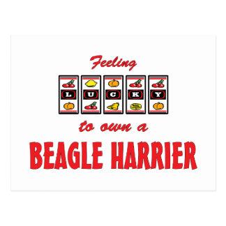 Lucky to Own a Beagle Harrier Fun Dog Design Postcard