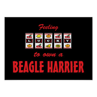 Lucky to Own a Beagle Harrier Fun Dog Design Posters