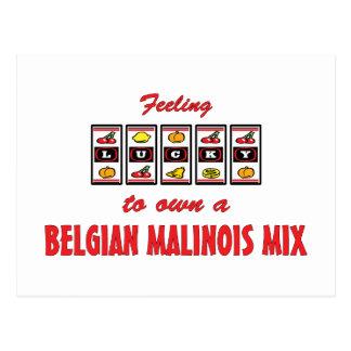 Lucky to Own a Belgian Malinois Mix Fun Dog Design Postcard