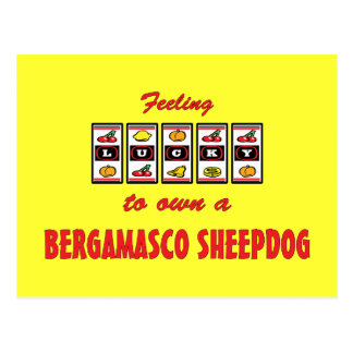 Lucky to Own a Bergamasco Sheepdog Fun Dog Design Postcard