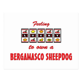 Lucky to Own a Bergamasco Sheepdog Fun Dog Design Post Card